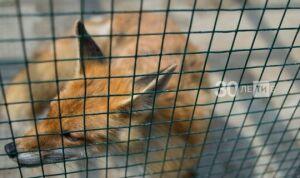 В Татарстане число случаев бешенства среди животных выросло почти в два раза