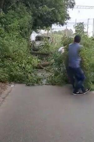 Под Казанью упавшее дерево едва не смяло «БМВ» и перегородило дорогу