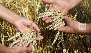 В Татарстане аграрии уже намолотили более 40 тыс. тонн зерна