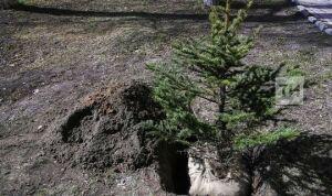УАТИ Казани добилось компенсационной высадки 5 тысяч новых деревьев и кустарников
