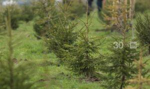 Синоптики Татарстана предупреждают о риске лесных пожаров