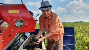 Фермер из Высокогорского района Татарстана собирает смородину комбайном