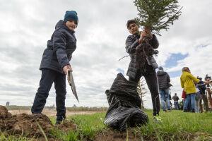 Казанские школьники и дошколята высадят 2,5 тыс. саженцев сосны и ели