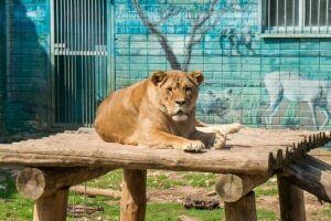 В Челнах на фоне скандала защитники зоопарка приглашают на праздник