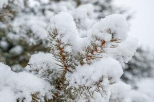 Синоптик спрогнозировал мягкую и снежную зиму в России