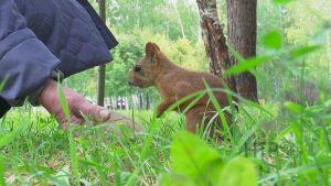 В нижнекамском парке «Семья» количество белок сократилось вдвое
