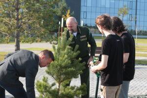 Почти 19 тыс. объектов лесного хозяйства оцифровали в Татарстане