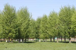 Уход за деревьями в Челнах обойдется городскому бюджету в 22,8 млн рублей