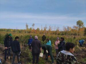 Высокогорцы высадили 8 тыс. деревьев в Ислейтарском лесничестве