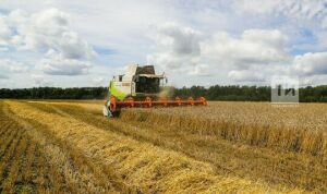 Семь районов Татарстана завершили уборку зерновых культур