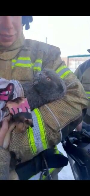Спасенного из пожара кота в Татарстане хозяева оставили у ветеринаров