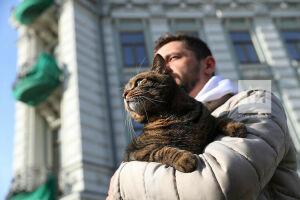 «Наташ, мы все уронили»: опубликован медиарейтинг популярных в 2020 году котов