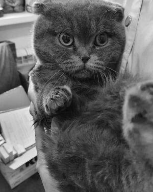 Умер кот Тишка, спасенный из пожара под Казанью