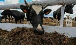 В Татарстане разработали критерии субсидий для племенных хозяйств