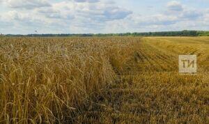 Татарстан планирует экспортировать сельхозпродукцию более чем на 320 млн долларов