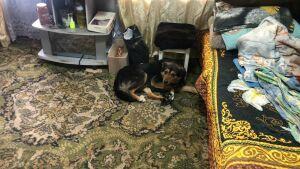 Попавшую в капкан собаку спасли в Татарстане