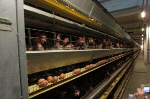 «Плодородие будет как век назад»: в РТ изучают новую технологию выпуска удобрений