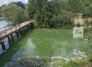 Загрязнивший реку Шемелку «Энергоресурс» обязали привести качество стоков в норму