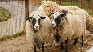 Житель Тюлячинского района смог начать строить овцеферму благодаря «Агростартапу»