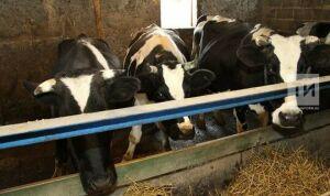В Татарстане 27 районов снизили поголовье крупного рогатого скота