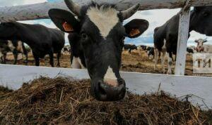В Татарстане чипировали 25 тыс. голов крупного рогатого скота