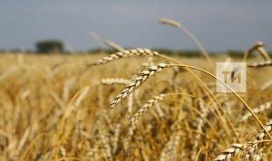 Татарстан перевыполнил план по производству продукции растениеводства на 1,6%