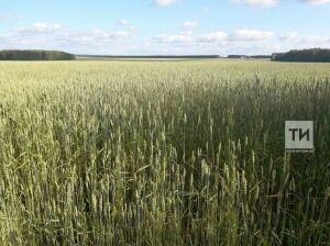Минсельхоз РФ призвал аграриев активнее искать новые рынки сбыта кормовых культур
