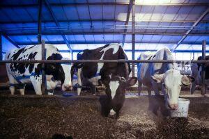 В Апастовском районе построят два животноводческих комплекса на 400 коров каждый