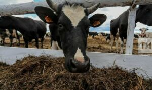 В Нижнекамском районе планируют открыть 18 новых мини-ферм