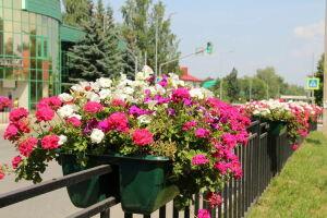 В этом году Елабугу украсят 200 тыс. цветов