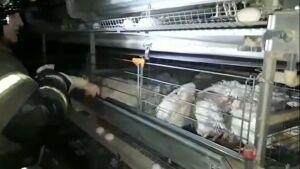 Из пожара на ферме в Татарстане спасли 90 тысяч голов птицы