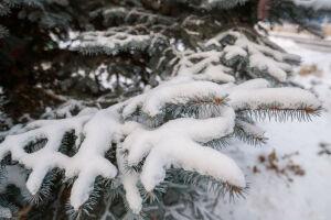 В Татарстане ожидается мокрый снег и до 1 градуса тепла