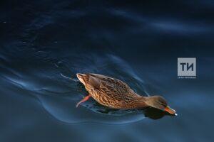В апреле в Татарстане откроется новый сезон охоты