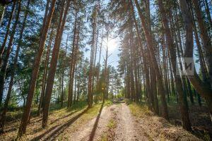 Посадочный лесной материал в Татарстане выращивают по примеру Чехии и Польши