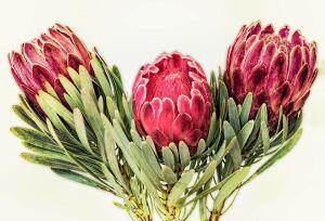Назван самый экзотичный цветок к 8 Марта