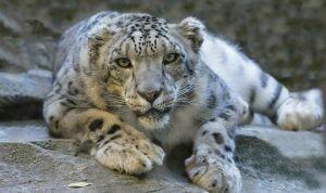 Шадриков объяснил, почему диких кошек будут разводить в Камско-Устьинском районе