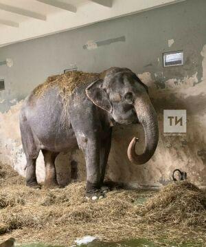 «Ад для слонов продолжится»: зоозащитники против шоу со слонами в цирке Казани