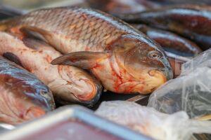 За год в Татарстане рыбаков оштрафовали на 4,2 млн рублей