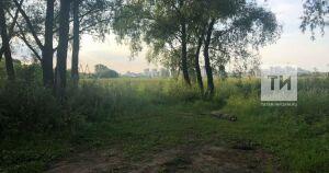 В Татарстане появятся шесть новых особо охраняемых природных зон