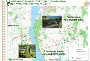 На трассе М12 в Татарстане дорожники могут построить 10 переходов для животных