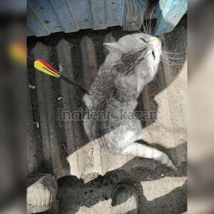 В поселке Сокуры неизвестные ранили кота стрелой из арбалета