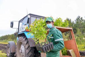 «Зеленый» рекорд «Татнефти»: компания посадит в этом году 5 млн деревьев