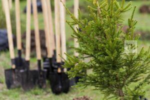 В РТ за время экологического двухмесячника посажено 700 тыс. деревьев и кустарников