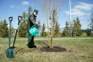 В честь погибших на войне уроженцев Татарстана пройдет акция «Сад памяти»