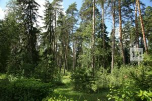 В лесах Татарстана объявлен наивысший класс пожарной опасности