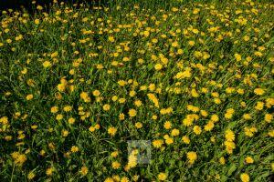 Как пережить сезонную аллергию и не навредить себе: советы татарстанцам дал аллерголог