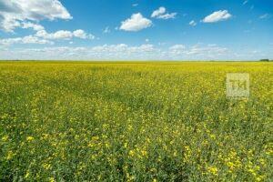 В Татарстане аномальная жара начнет спадать с середины недели