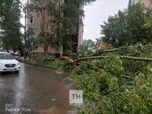 В Казани сильным ветром повалило дерево, оно упало на двух женщин и ребенка