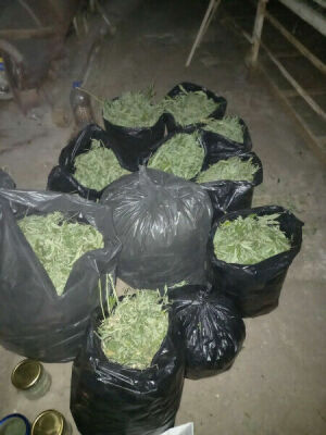 На ферме в Татарстане полицейские нашли 21 кг марихуаны, гранаты и оружие