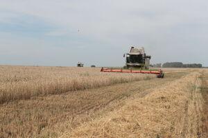 В Татарстане собрано более 2,3 млн тонн зерна при урожайности 15,4 центнера с гектара